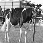 Nieuwe aanwinsten voor Hullcrest Holsteins stallen
