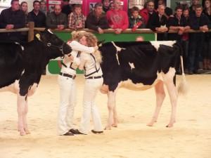 Hullcrest Holstein sHow 2015