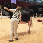 I-Cow Aurora terug aan het front tijdens Holland Holstein Show
