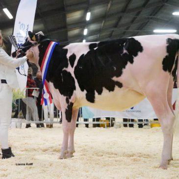 Winterkeuring in Pesse prooi voor Hullcrest Holstein