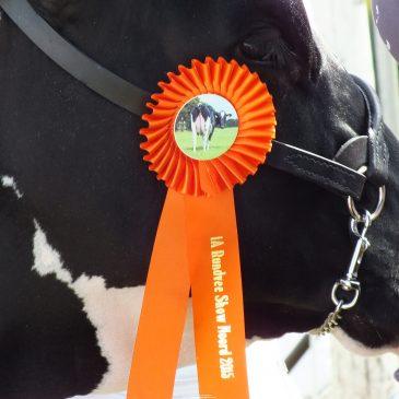 Hullcrest Holsteins stelen de show op Rundveeshow Noord